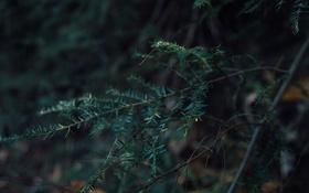 Обои ветки, лес, листья