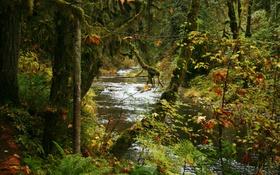 Картинка осень, деревья, парк, ручей, США, кусты, Silver Falls State Park