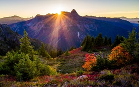 Картинка деревья, закат, горы, США, лучи солнца, Washington State Park