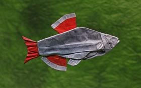 Картинка бумага, фон, рыбка, оригами, Кардинал