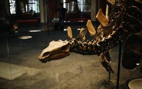 Обои динозавр, кости, скелет
