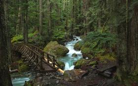 Обои лес, деревья, мост, река, камни, чаща
