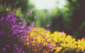 Обои цветы, растения, желтые, лепестки, сиреневые