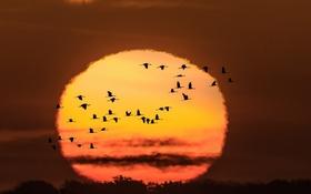 Обои солнце, птицы, краски, яркие, Закат