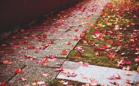 Обои осень, листья, дорожка, красные