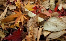 Картинка осень, листья, сухие