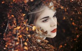 Картинка листья, девушка, ветки, брюнетка