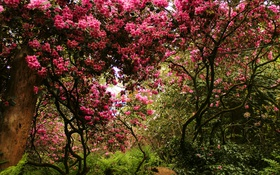 Обои деревья, парк, Швейцария, кусты, цветущие, Park Seleger Moor