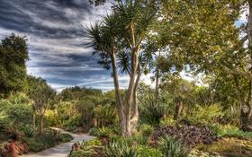 Обои деревья, HDR, сад, кактусы, США, тропинка, кусты