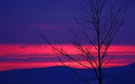 Обои облака, горы, дерево, силуэт, зарево