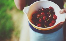 Обои вишня, ягоды, черешня