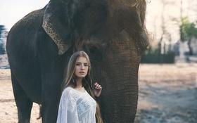 Картинка слон, девушка, взгляд