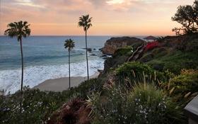 Обои море, закат, пальмы, побережье, горизонт, США, Laguna Beach
