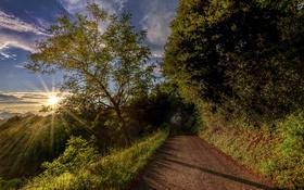 Обои дорога, небо, трава, облака, деревья, горы, лучи солнца