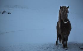 Обои зима, конь, вечер