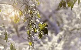 Картинка листья, снег, природа