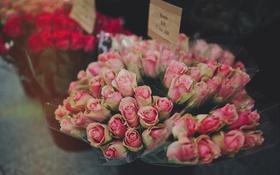 Обои розы, розовые, букеты