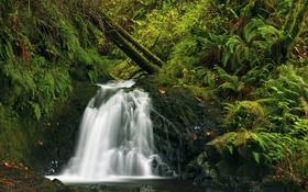 Обои зелень, лес, трава, ручей, камни, водопад, мох