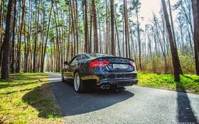 Обои машина, авто, лес, асфальт, Audi, Ауди, фотограф