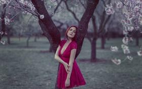 Картинка девушка, лицо, дерево, плате