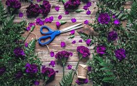 Обои листья, лепестки, нитки, папоротник, ножницы, гвоздики, барвинок