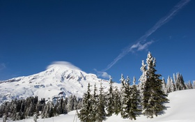 Обои зима, лес, небо, National Park, Mount Rainier