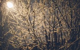 Картинка зима, снег, ветки, фонарь