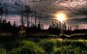 Обои лес, природа, утро