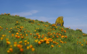 Картинка поле, лето, небо, цветы
