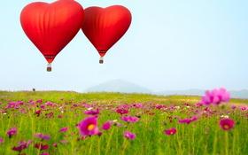 Обои цветы, воздушные шары, В форме сердца