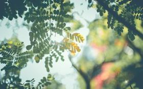 Обои листья, солнце, желтые, зеленые