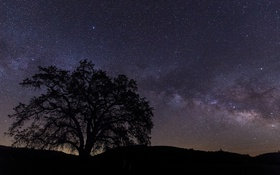 Обои звезды, ночь, природа, дерево, силуэт