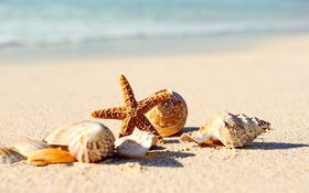 Обои seashells, starfish, paradise, shore, sand, blue, sea