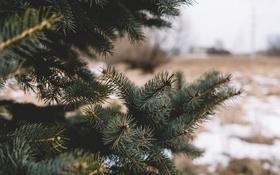 Обои иголки, дерево, елка