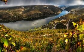 Обои тучи, река, дождь, поля, Португалия, плантации, теплоход