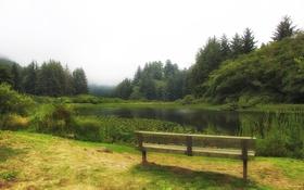 Обои лес, трава, деревья, скамейка, туман, пруд, парк