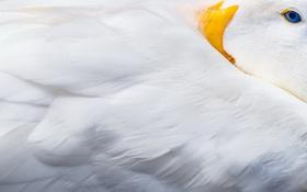 Картинка макро, фон, птица