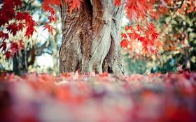 Обои листья, дерево, красные