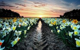 Обои поле, закат, цветы