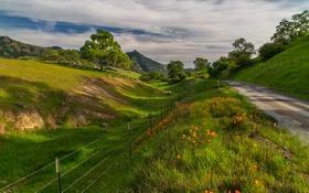 Картинка дорога, лето, трава, деревья, цветы, горы, ограждение