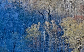 Картинка лес, деревья, краски, США, Great Smoky Mountains National Park, Newfound Gap