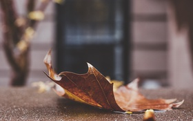 Обои лист, листок, дверь, клен