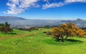 Обои дорога, трава, деревья, горы, склон, панорама