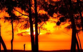 Обои солнце, лучи, деревья, закат, берег, вечер, мальчик