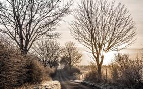 Обои дорога, природа, утро