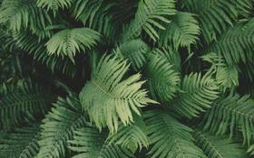 Картинка листья, зеленые, много