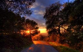 Обои дорога, небо, солнце, деревья, рассвет