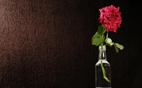 Обои цветок, фон, бутылка