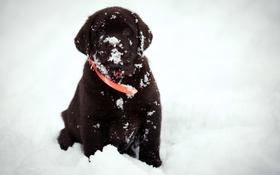 Обои взгляд, снег, друг, собака