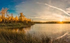 Обои осень, листья, деревья, озеро, камыши, рассвет, желтые